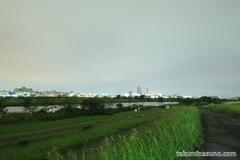 紅葉レポ2014 多摩川の秋はまだまだ時間がかかりそうです