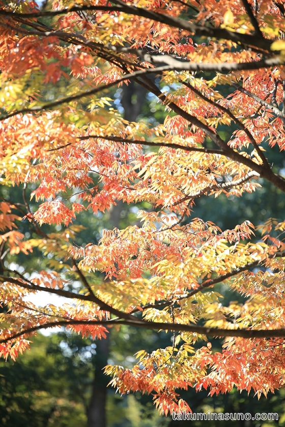 Orange and Yellow Leaves of Shinjuku Central Park portrait