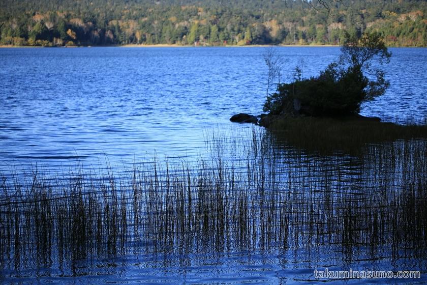 Ozenuma Pond looked deep in blue