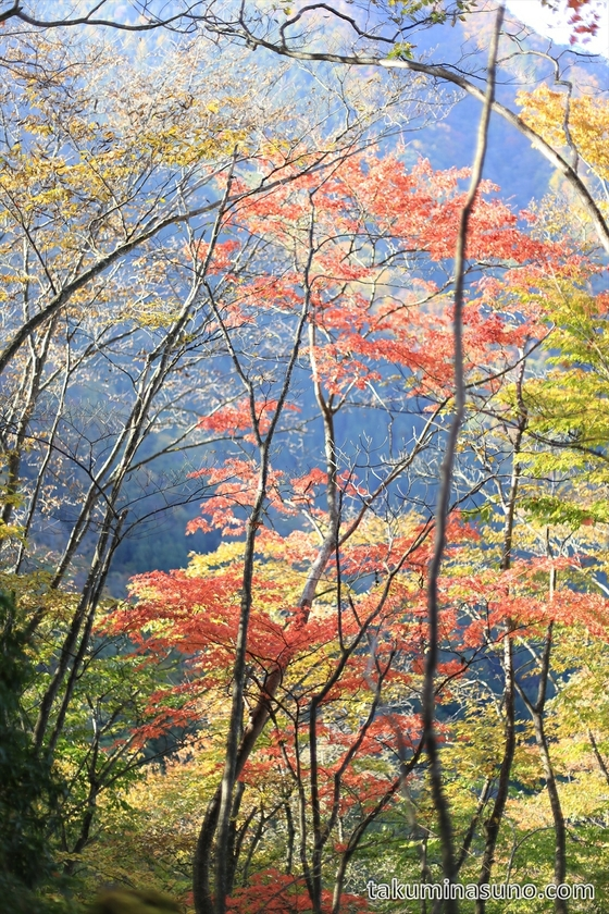 Red leaves of Mt Mutsuishi
