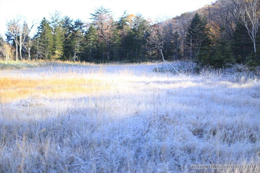 Severe frost makes ground white at Ozegahara Marshland