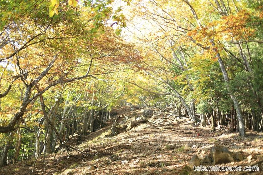 Steep Slope to the peak of Mt Mutsuishi at Okutama 01