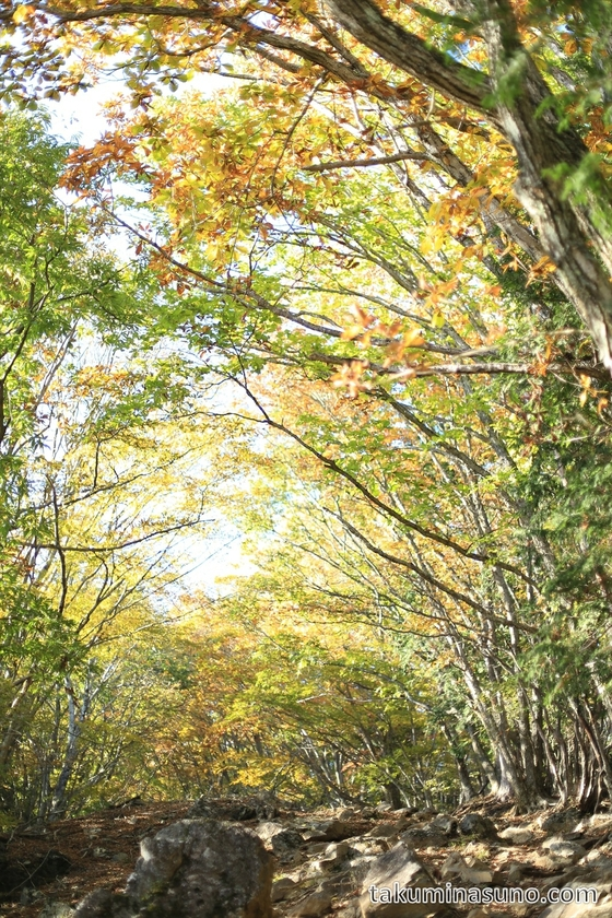 Steep Slope to the peak of Mt Mutsuishi at Okutama 02