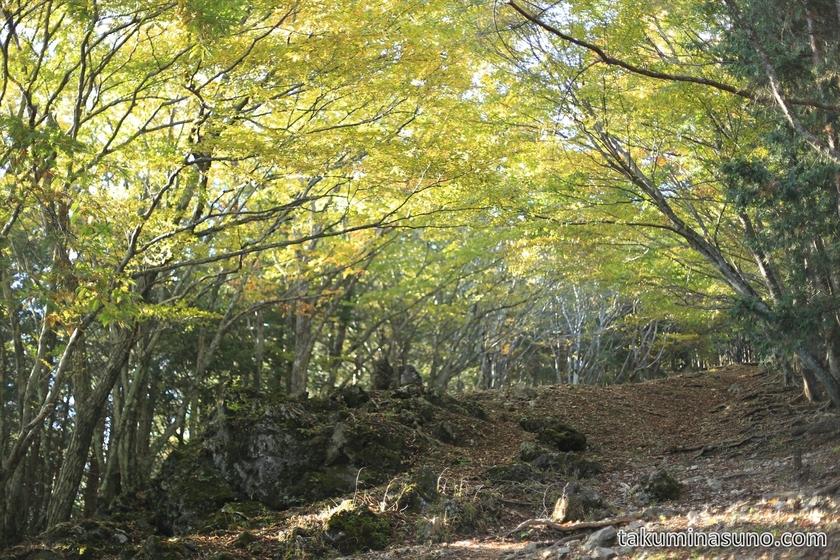 Steep Slope to the peak of Mt Mutsuishi at Okutama 03