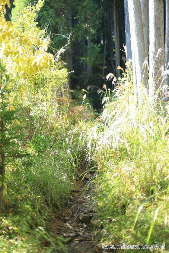 Trekking Course to Mt Mutsuishi at Okutama 01