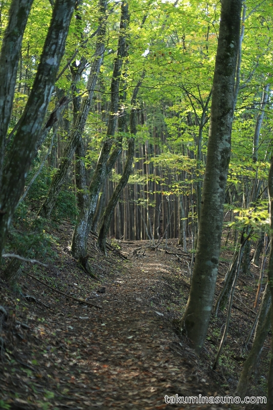 Trekking Course to Mt Mutsuishi at Okutama 05