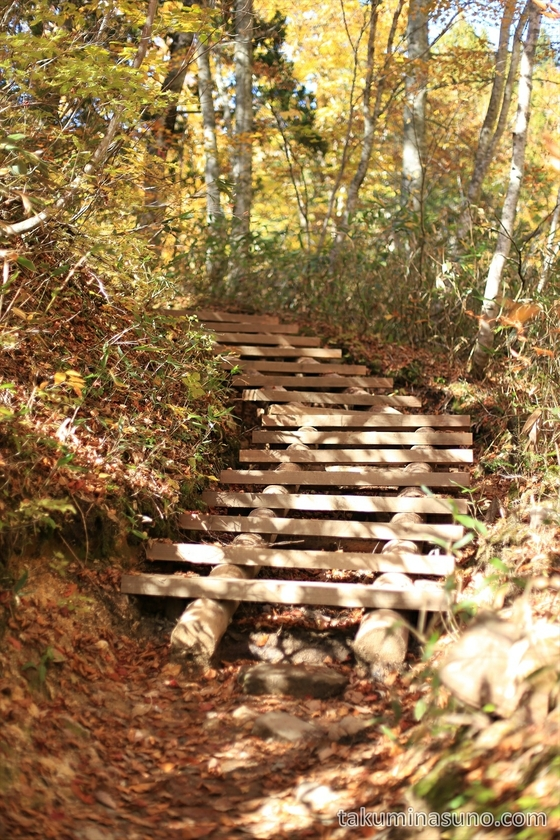 Wooden stairs at Oze National Park