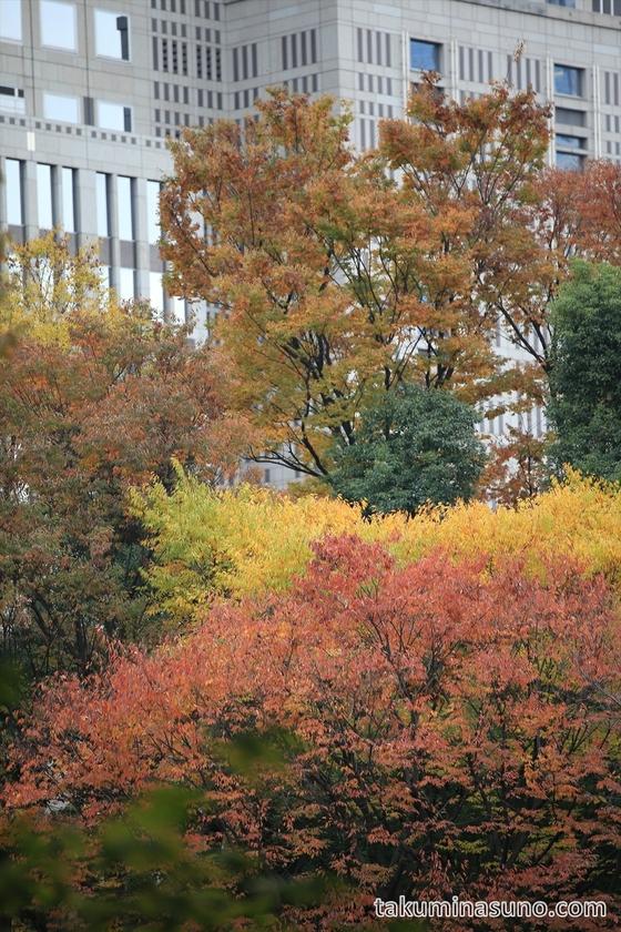 Autumn Colors below Tokyo Metroplitan Tower