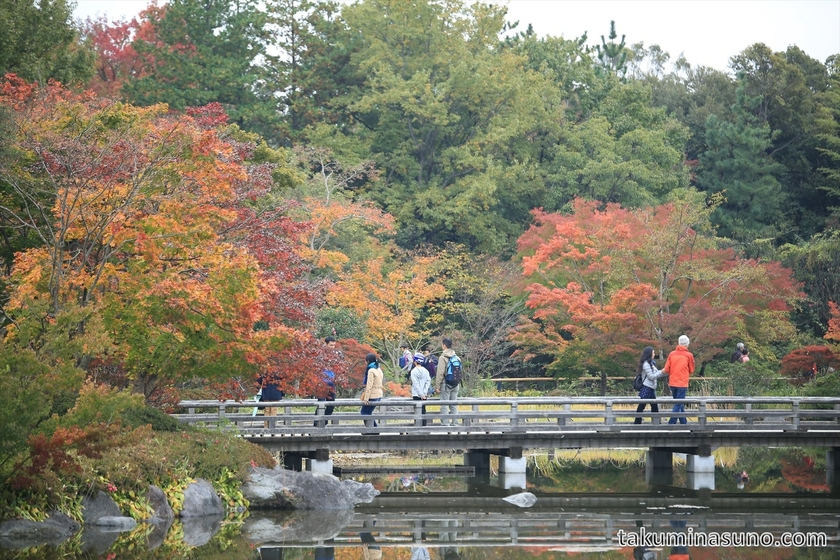 Autumn colors and bridge at Showa Memorial Park