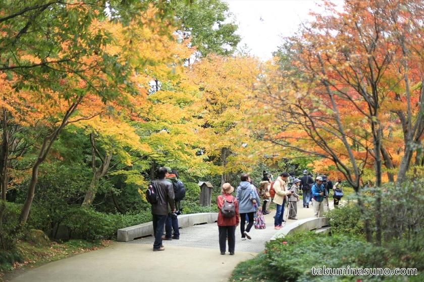 Autumn colors at Showa Memorial Park 01