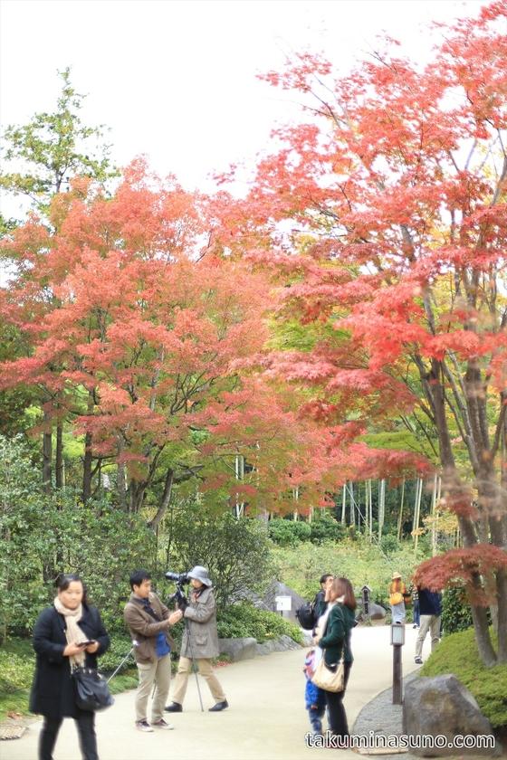 Autumn colors at Showa Memorial Park 02