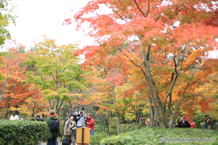 Autumn colors at Showa Memorial Park 03