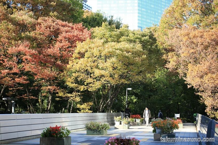 Autumn colors at the bridge of Shinjuku Central Park 3rd