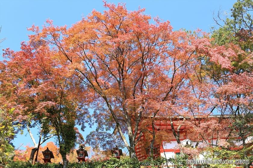 Autumn colorsa at the entrance of Kurama Temple