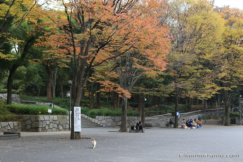 Cat and Autumn Colors at Shinjuku Central Park