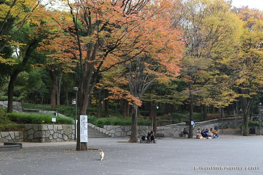 Cat and Autumn Colors at Shinjuku Central Park