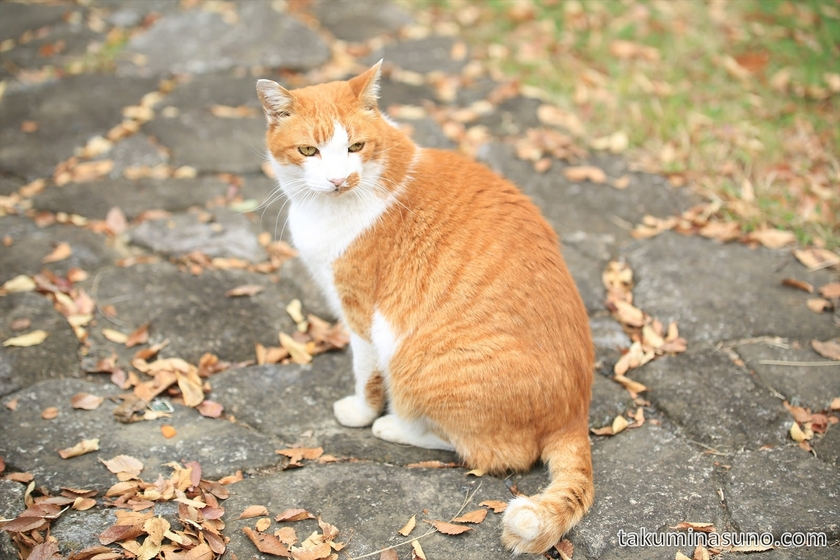 Cat at Showa Memorial Park 02