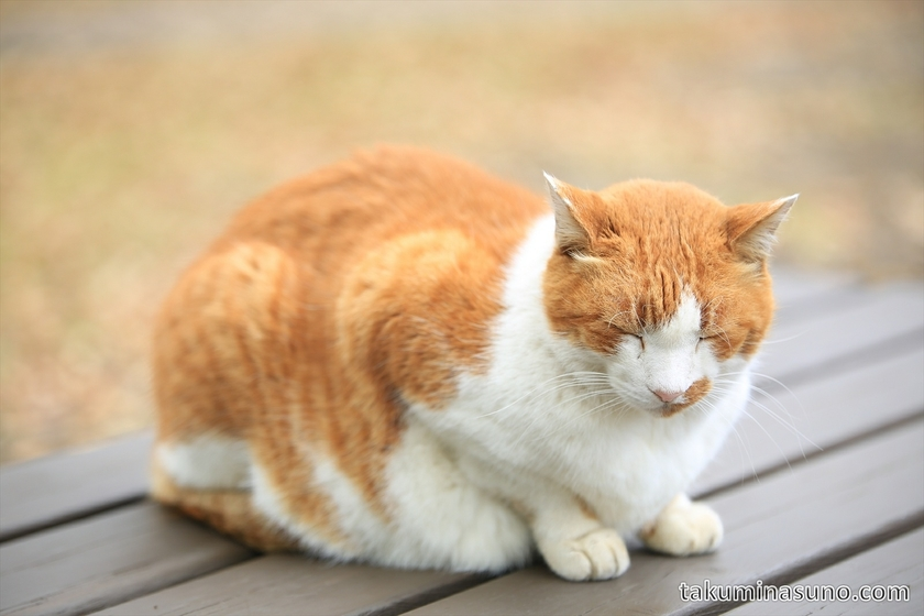 Cat at Showa Memorial Park 03