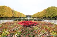 紅葉レポ2014 昭和記念公園の赤と黄色のハーモニー