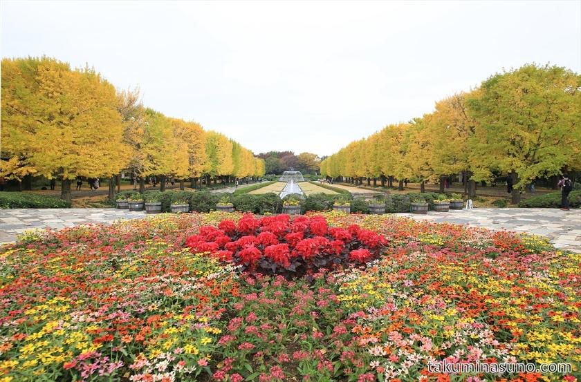 Colorful square at Showa Memorial Park