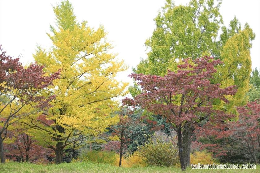 Colorful view at Showa Memorial Park