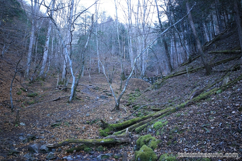 Deep inside the Forest of Mt Kawanori
