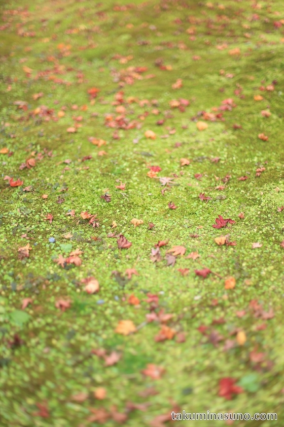 Fallen Leaves at Eikando Temple