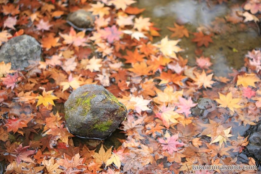 Fallen maple leaves at Showa Memorial Park