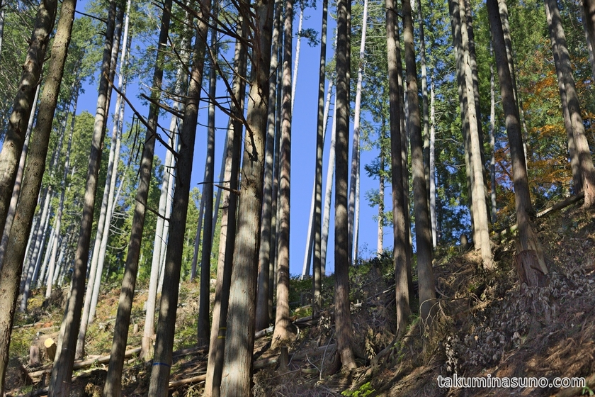 Forest at the Foot of Mt Kawanori