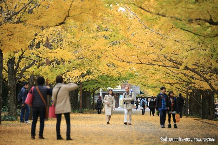 Gingko gate of Showa Memorial Park