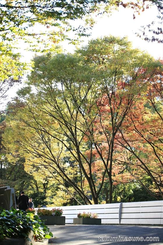 Going to the bridge of Shinjuku Central Park