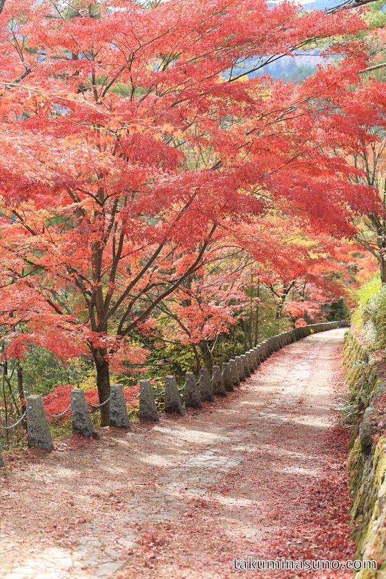 Japanese Maple Slope of Yoshino