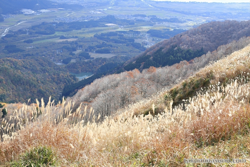 Japanese Pampas Grass and Wide View at Takashima Trail