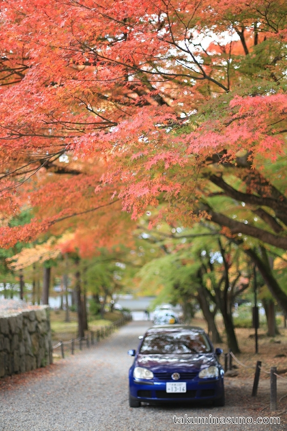 Japanese maple tree and car at Nanzenji Temple