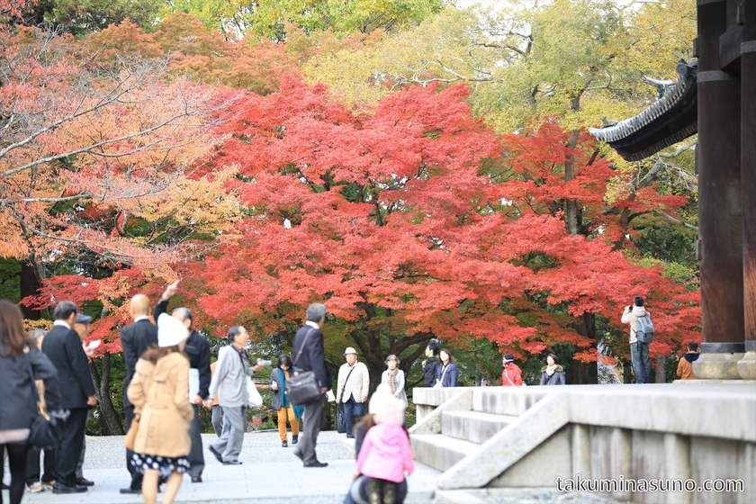 Japanese maple tree at Nanzenji Temple