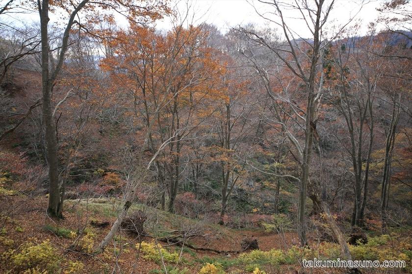 Landscape of Japanese Beech Trees at Takashima Trail