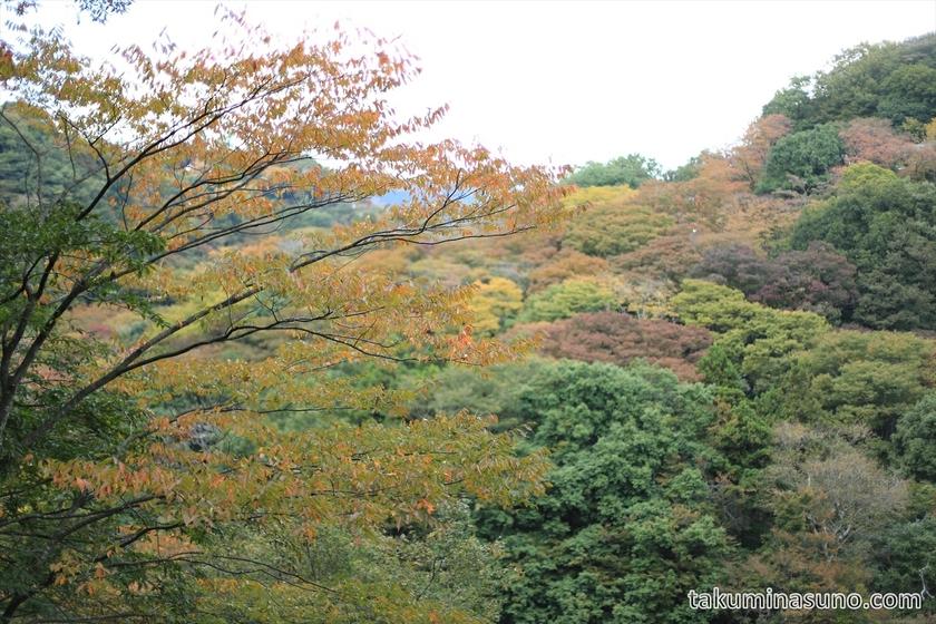 Landscape of autumn colors at Hakone