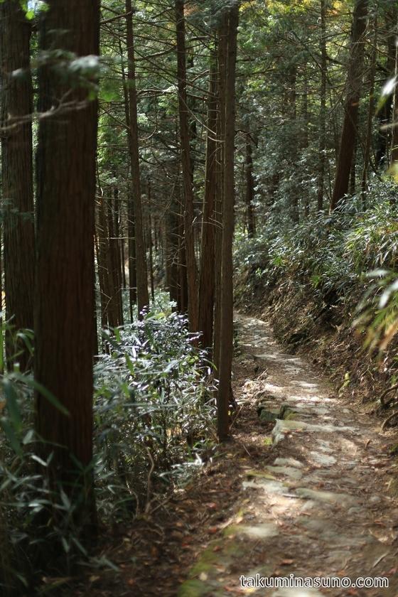 Mountain Path Deep Inside Mt Yoshino