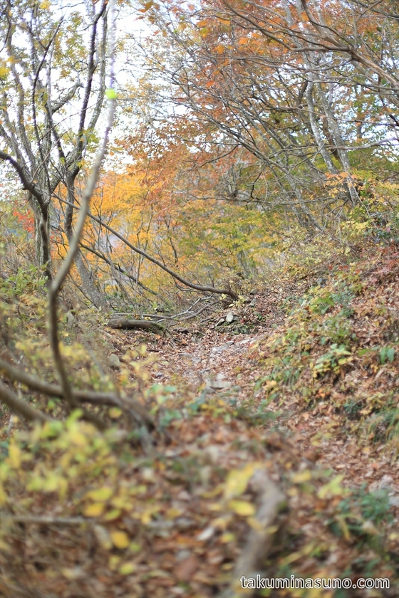 Mountain Path of Takashima Trail