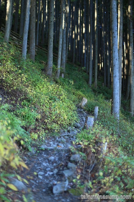 Mountain Path to Mt Kawanori