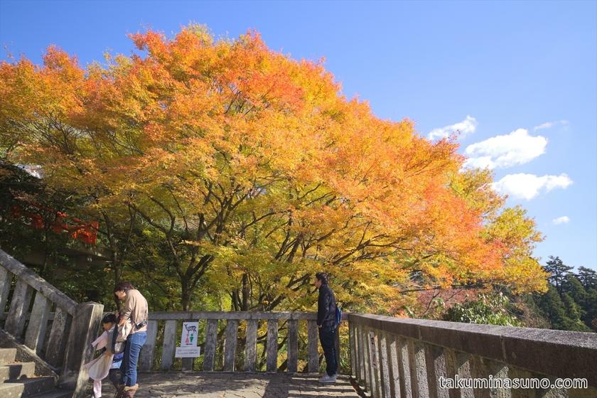 Orange Sakura tree at Kurama Temple