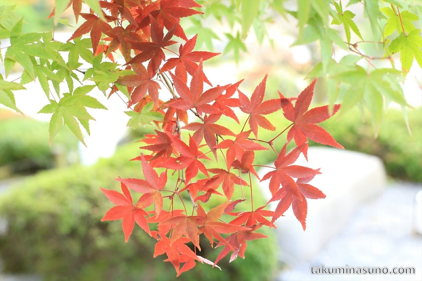 Red Leaves of Yuzen-en Garden at Chionin Temple