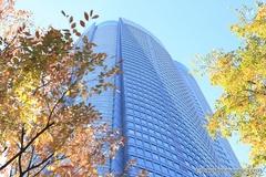 紅葉レポ2014 六本木ヒルズ森タワーと紅葉
