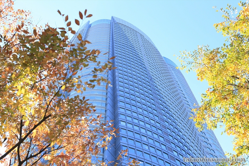 Roppongi Hills Mori Tower and Autumn Colors