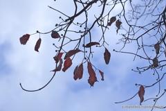 木枯らし感じる秋の空