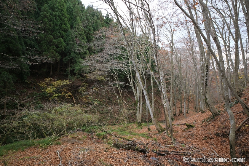 Unspoiled Forest of Takashima Trail