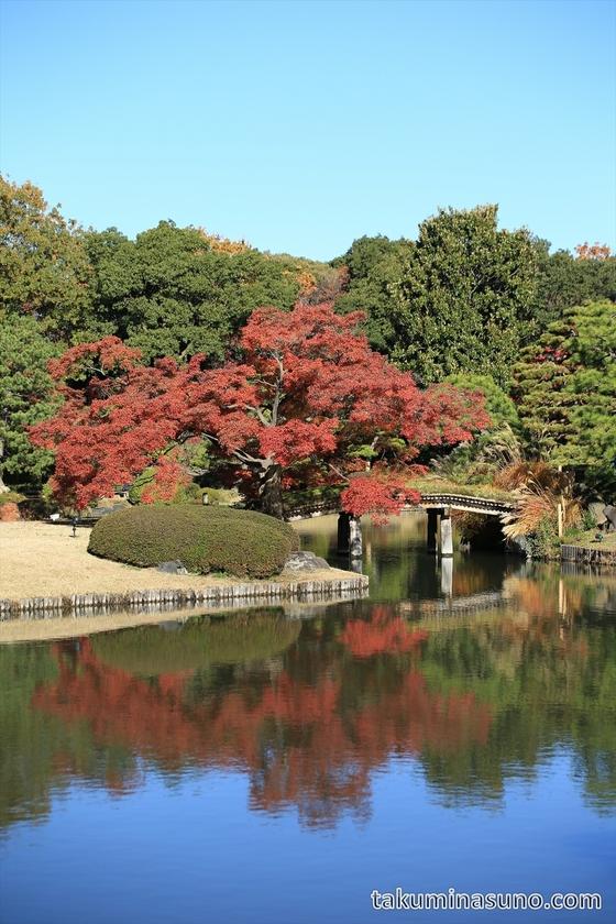 Autumn Colors around Pond at Rikugien Gardens
