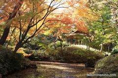 紅葉レポ2014 紅葉いっぱいの六義園に行って、お団子を食べよう!