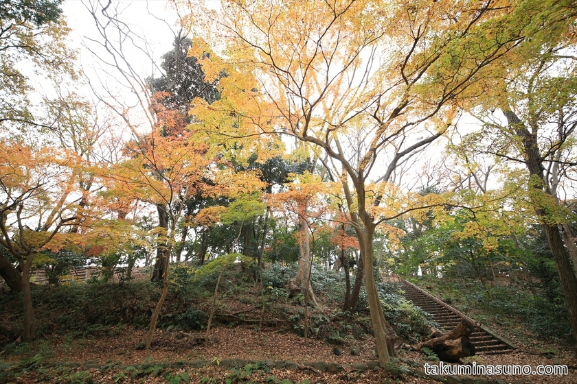 Autumn Colors of Genjiyama Park