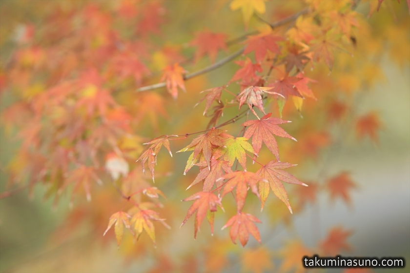 Autumn Colors of Zuisenji Temple